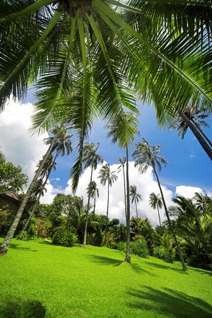 tropical garden: Tropical garden with coconut palm tree. Stock Photo
