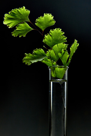 Green leaf in test tube isolated on black background