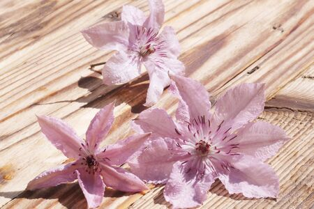 Clematis flowers with water drops on a wooden table Stok Fotoğraf