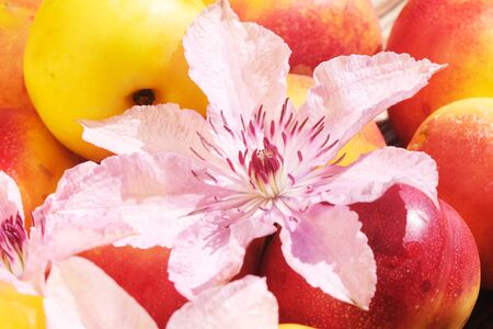 Nectarine Fruits and Clematis Flowers On A Wooden Table