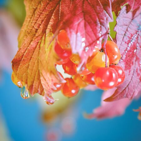 autumn leaves and water drops on blue sky background