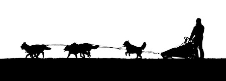 mushing: silhouette of a dogs pulling sleds on white background Stock Photo