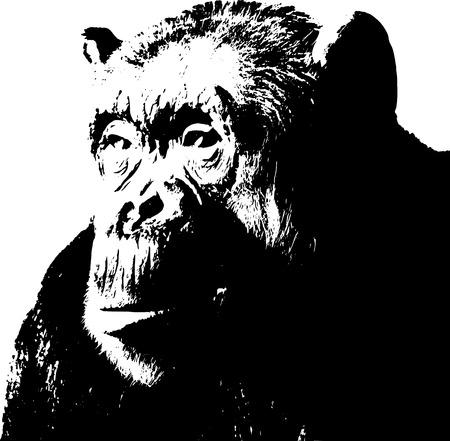 chimp: Chimpanzee