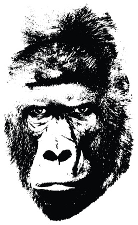 illustration of gorilla face on white background