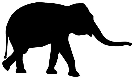 africana: silhouette of a elephant on white background