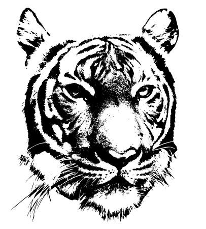 tigre blanc: silhouette noire et blanche de visage d'un tigre Illustration