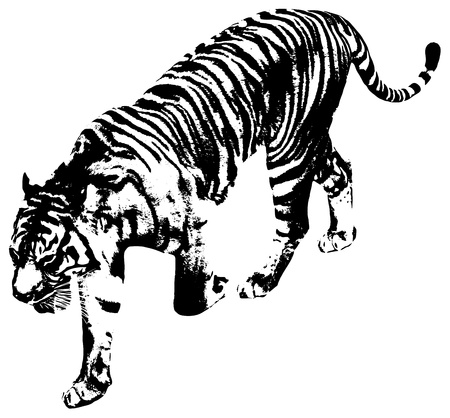 Black and white illustration of a tiger Vector