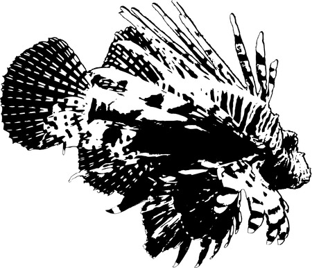 marinelife: illustration lionfish on white background Illustration