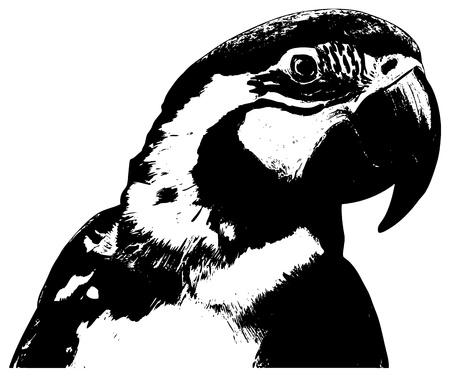 parrot illustration on white background