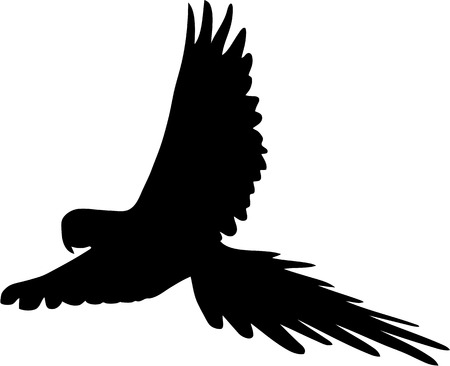tropical bird: silhouette of flying parrot