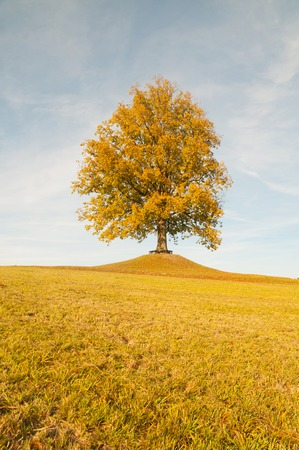 Autumn landscape with big tree on horizon and blue sky