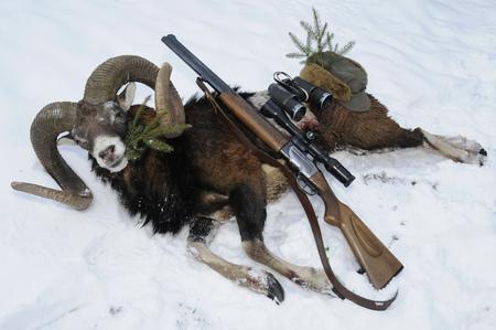 mouflon: Mouflon hunting trophy with gun on snow