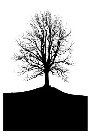 silhouette of a large tree without leaves on the hill Фото со стока