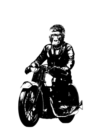 Motorbike rider with gorilla head illustration Фото со стока