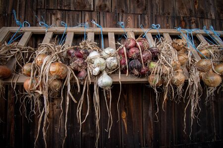 drying onions of different colors infront of barn