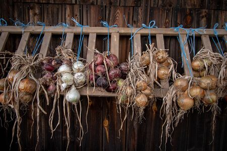 onions of different colors hanging on a frame Фото со стока
