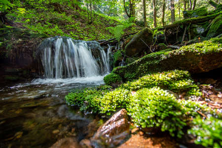 stream in the forest with moss
