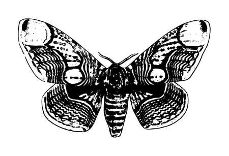 butterfly illustration, black on white background Фото со стока