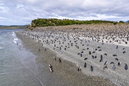 beagle: Island of Penguins in the Beagle Channel, Ushuaia, Argentina