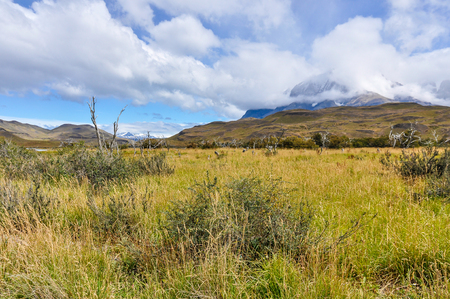 torres del paine: Meadow in the Torres del Paine National Park, Patagonia, Chile