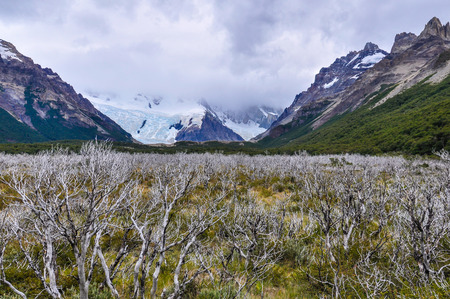 cerro chalten: Cerro Torre Walk, El Chalten, Patagonia, Argentina
