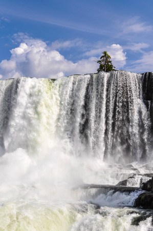 top seven: Tree on top a waterfall at Iguazu Falls, one of the New Seven Wonders of Nature, Argentina