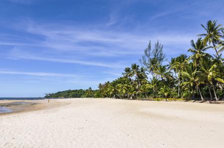 brazil beach: Palm trees and sand in Boipeba Island Beach Morro de Sao Paulo, Salvador, Brazil Stock Photo