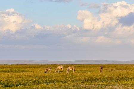 donkeys: Donkeys in Lencois Maranheses National Park, Brazil Stock Photo