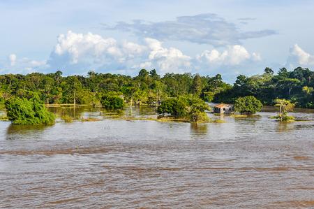 rio amazonas: Bosque inundado como se ve desde el barco en el río Amazonas en Brasil.