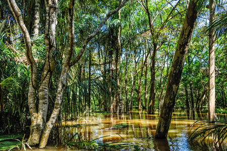 amazon rainforest: Flooded trees in the Amazon Rainforest close to Santarem, Brazil Stock Photo