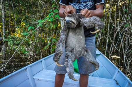 pink dolphin: Sloth with a local boy in the Amazon Rainforest, close to Manaus, Brazil Stock Photo