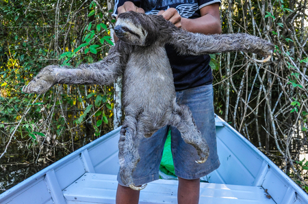 pink dolphin: Sloth with a local boy in the Amazon Rainforest, close to Manaus, Brazil Foto de archivo