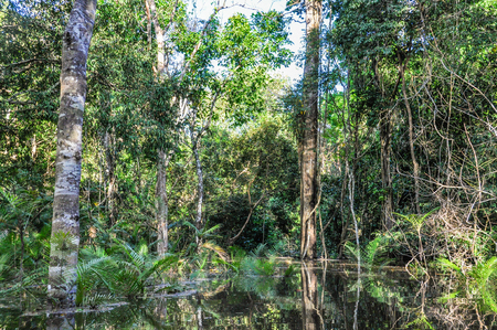 pink dolphin: Flooded trees in the Amazon Rainforest, close to Manaus, Brazil Stock Photo