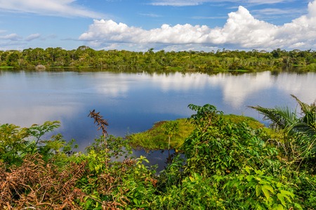 pink dolphin: View of the lake in the Amazon Rainforest, close to Manaus, Brazil