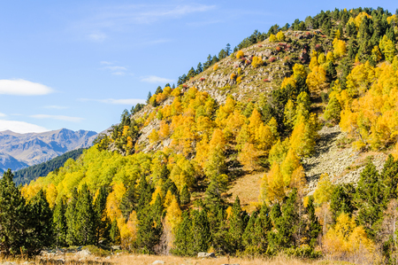 tourism in andorra: Colorful forest landscape in Fall, in the Valley of Estanyo River, Andorra Stock Photo