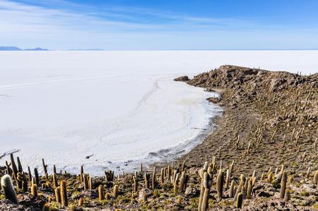 salt flat: Cactus group in Isla de Pescado in Salar de Uyuni, the biggest salt flat in the world, Bolivia