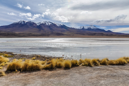 high plateau: Colorful lagoon with flamingos in the High Andean Plateau desert in Bolivia