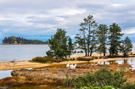 tasman: Trees standing on the shore in the Abel Tasman National Park in New Zealand Stock Photo