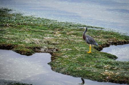 tasman: Lonely bird in the Abel Tasman National Park in New Zealand