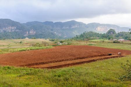 Vista de un pequeño campo en el Valle de los Vinales en Cuba