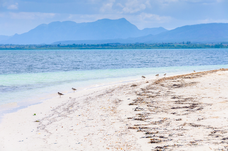 secluded: Birds on a secluded white sand beach in the tropical Cayo Levisa Island in Cuba