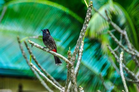 bounty: Vista de un pequeño pájaro en Bounty Island en Fiji Foto de archivo