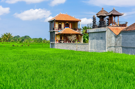 ubud: House in rice field in the town of Ubud, Bali