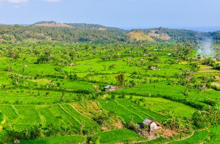 Rice fields near Tirtagangga in Bali Island, Indonesia Stock Photo