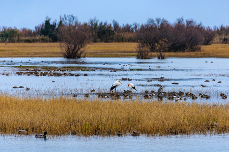 Wildlife in the wetlands of Aiguamolls in the Emporda Region, Catalonia, Spain