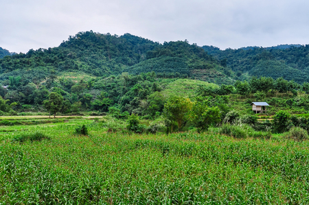 Green countryside in the village Luang Nam Tha, Northern Laos Stock Photo