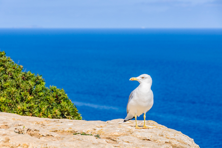 Seagull resting on a cliff in Formentera Island, Spain Stock Photo