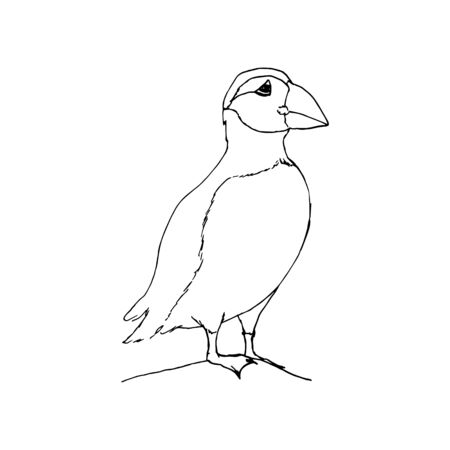 Polar arctic puffin. Black outline on white background. Picture can be used in greeting cards, posters, flyers, banners, further design etc. Vector illustration.