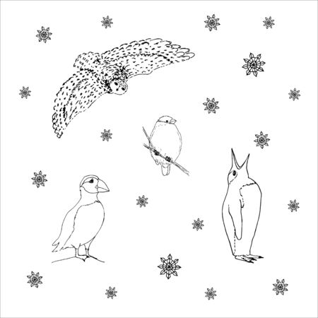Set of northern winter birds: owl, bullfinch, puffin, penguin. Black outline on white background. Picture can be used in greeting cards, posters, flyers, banners, further design etc. Vector illustration.