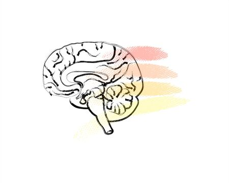 World Mental Health Day background. Brain with colorful lines. Line art doodle sketch. Black outline on white background.